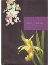 Orchideen_1
