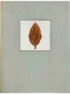 Tabago . Ein Bilderbuch vom Tabak und den Freund..