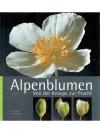 Alpenblumen - Von der Knospe zur Pracht