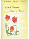 Carmel Flowers - Fleurs du Carmel